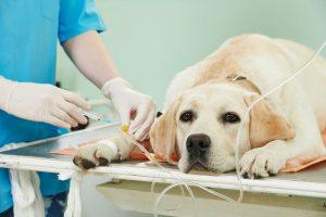 Применение наркоза при лечении животных
