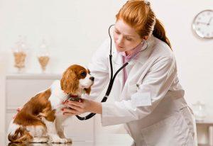 Прием у ветеринарного врача.