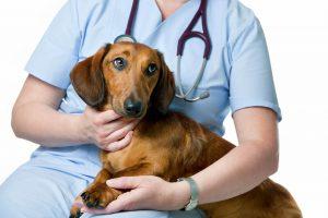 Ветеринарная терапия